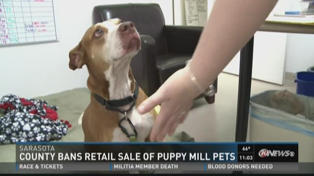 County bans retail sale of puppy mill pets