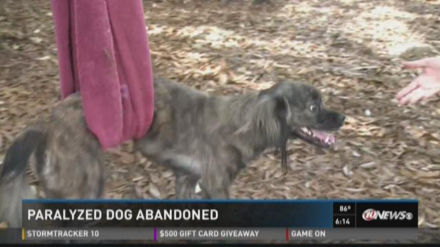 Owner forced to give paralyzed dog to shelter for treatment