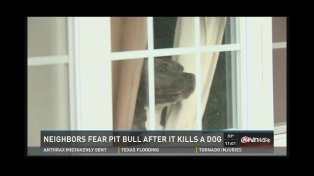 Neighbors fear pit bull after it kills a dog