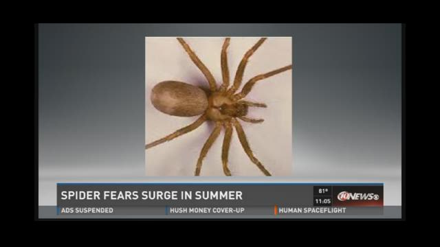 Spider fears surge in summer