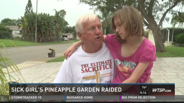 Thief raids heart patient's pineapple garden