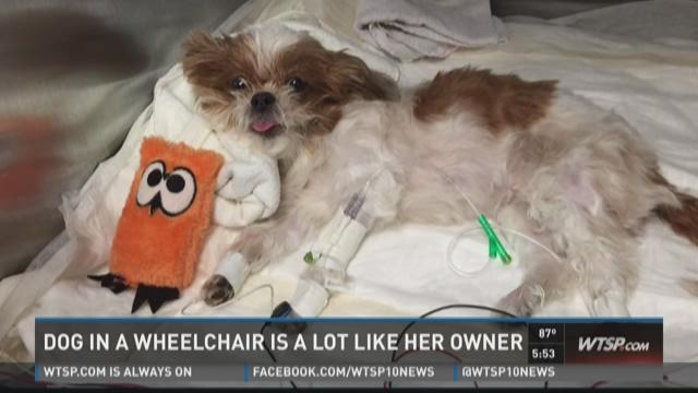 Injured dog, owner share mobility issue