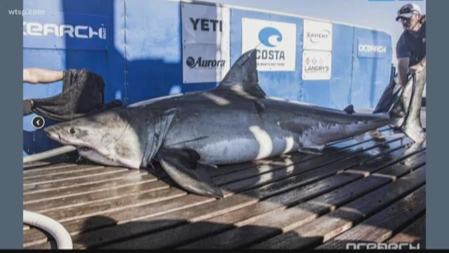 Tampa loan sharks