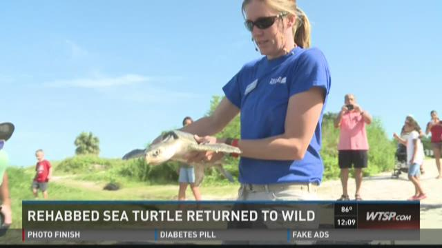 Rehabbed sea turtle returned to wild