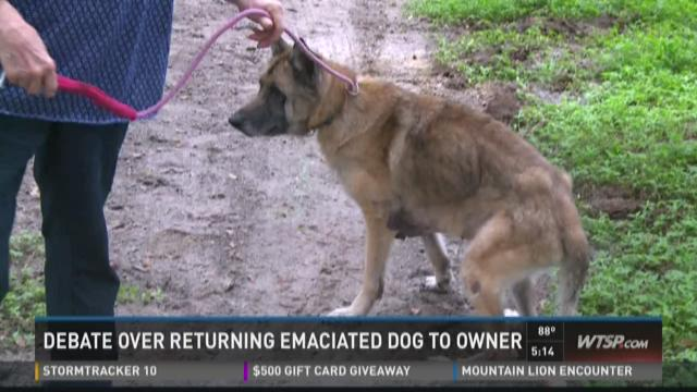 Should emaciated dog be returned to owner?