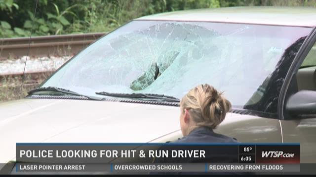Tampa PD seeking hit and run driver