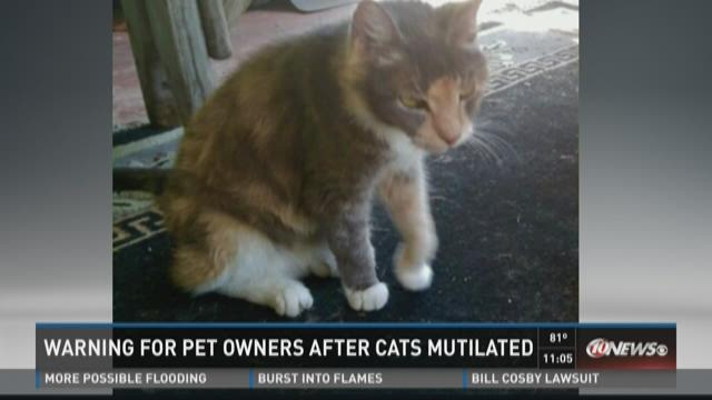 Warning for St. Pete pet owners after cats killed