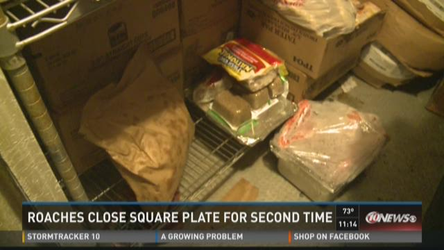 Roaches close Square Plate for the second time