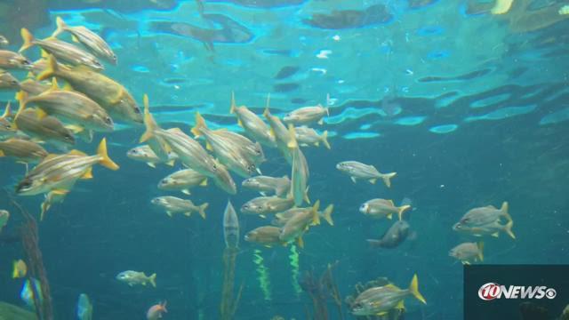 Florida Aquarium Breaks Ground On Big Expansion